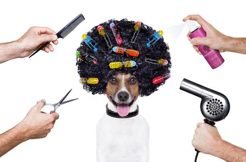 Tips on How to Promote Christmas Party Hair in your Hair Salon